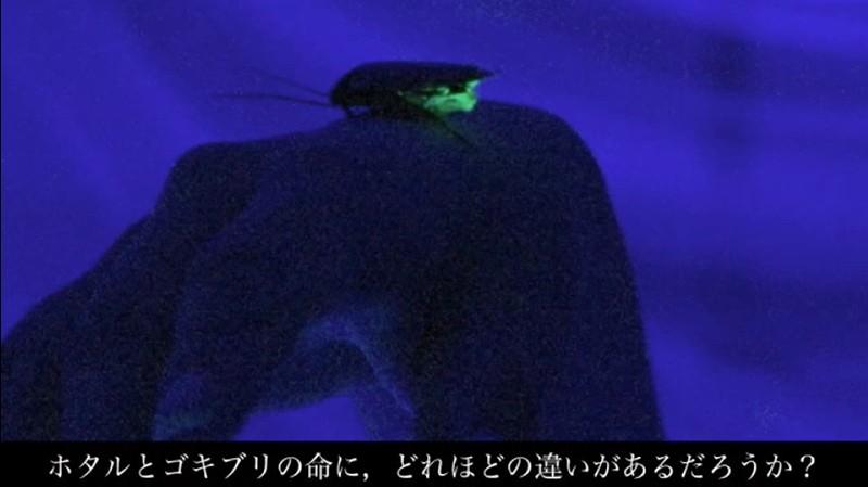 ゴキブリを光らせる